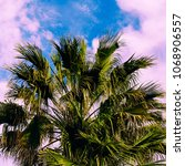 fashion palm canary islands... | Shutterstock . vector #1068906557