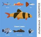 exotic tropical aquarium fish...   Shutterstock .eps vector #1069049933