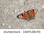Butterfly On Gray Ground...