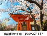 Stock photo full cherry tree blossom at the sanjusangen do shinto temple in kyoto japan 1069224557