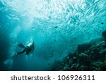 diver swims with fish - stock photo
