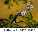 a dainty monarch butterfly ... | Shutterstock . vector #1069341317