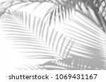 Small photo of abstract background of shadows palm leaves on a white wall. White and Black