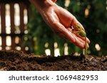 hands of farmer growing and... | Shutterstock . vector #1069482953