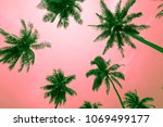 coconut palm trees   tropical... | Shutterstock . vector #1069499177