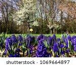 beautiful park in spring | Shutterstock . vector #1069664897