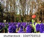 spring blossom in the park | Shutterstock . vector #1069703513