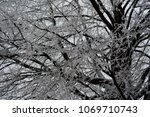 ice covered tree branches and... | Shutterstock . vector #1069710743