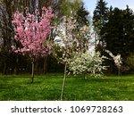 spring blossom in the garden | Shutterstock . vector #1069728263