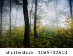 autumn forest with vivid foliage   Shutterstock . vector #1069732613
