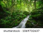 forest river  green natural...   Shutterstock . vector #1069732637