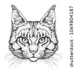 hand drawn portrait of cute cat ... | Shutterstock .eps vector #1069804187