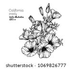 hand drawings california poppy... | Shutterstock .eps vector #1069826777