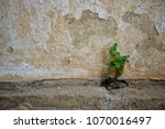 tree growing through cracked... | Shutterstock . vector #1070016497