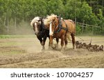 Working Horse With A Farm Fiel...