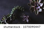 botanical nature background... | Shutterstock . vector #1070090447