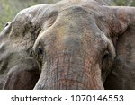 Small photo of Detailed head of the elephant in african country