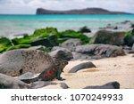 galapagos islands christmas... | Shutterstock . vector #1070249933