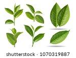 set of realistic green tea... | Shutterstock .eps vector #1070319887