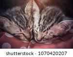 close up portrait of sleeping... | Shutterstock . vector #1070420207