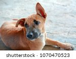 dog happy  dog color with brown   Shutterstock . vector #1070470523