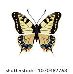 family papilionidae butterfly... | Shutterstock .eps vector #1070482763