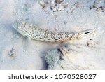 inhabitants of the great... | Shutterstock . vector #1070528027