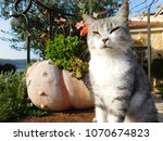 cat relaxing on a old well in... | Shutterstock . vector #1070674823