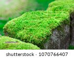 Close Up Moss On The Walls...