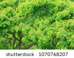 green tree and leaf environment ... | Shutterstock . vector #1070768207
