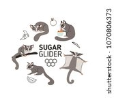 sugar gliders in different... | Shutterstock .eps vector #1070806373