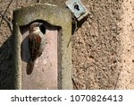 sparrow on a nesting hole at... | Shutterstock . vector #1070826413
