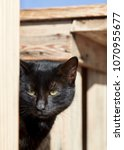 portrait of a black stray cat... | Shutterstock . vector #1070955677