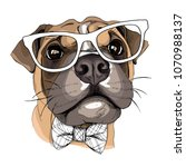 Dog Boxer In A Glasses And Wit...