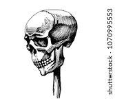 the skull is wearing a wooden... | Shutterstock . vector #1070995553