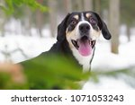 the portrait of a happy... | Shutterstock . vector #1071053243