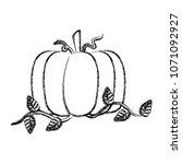 grunge organic pumpkin...   Shutterstock .eps vector #1071092927