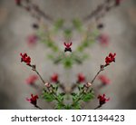 Small photo of Autumn sage (Salvia Greggii),native ornamental plant with scarlet red flowers on a natural springtime background texture.