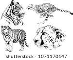vector drawings sketches... | Shutterstock .eps vector #1071170147