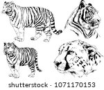 vector drawings sketches... | Shutterstock .eps vector #1071170153