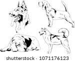 vector drawings sketches... | Shutterstock .eps vector #1071176123