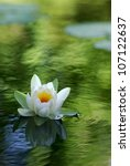 White Water Lily Floating On A...
