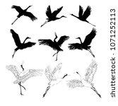 crane sketch  bird flying over... | Shutterstock .eps vector #1071252113