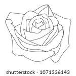 Stock photo  rose white buds of roses black line 1071336143
