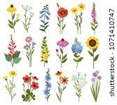 field flowers and grass.... | Shutterstock .eps vector #1071410747