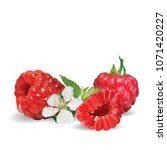 fresh  nutritious and tasty... | Shutterstock .eps vector #1071420227