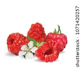 fresh  nutritious and tasty... | Shutterstock .eps vector #1071420257