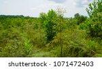 eucalyptus plantation for... | Shutterstock . vector #1071472403