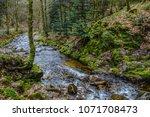 Water Flowing Through Moss...