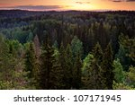 Forest valley before sunrise in magical early morning light in Nuuksio National Park, Finland - stock photo